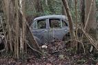 car-plantation20