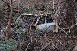 car-plantation22